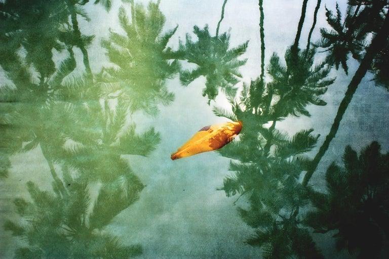 Stuart Möller Color Photograph - 'Yellow Leaf'   Oversize Archival Pigment Print - Signed Limited Edition