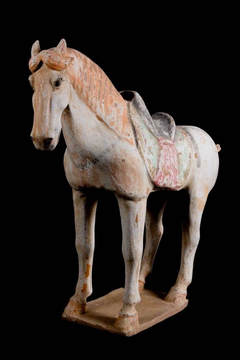 Stunning Terracotta Standing Horse, Tang Dynasty, China '618-907 AD', TL Test In Excellent Condition For Sale In San Pedro Garza Garcia, Nuevo Leon