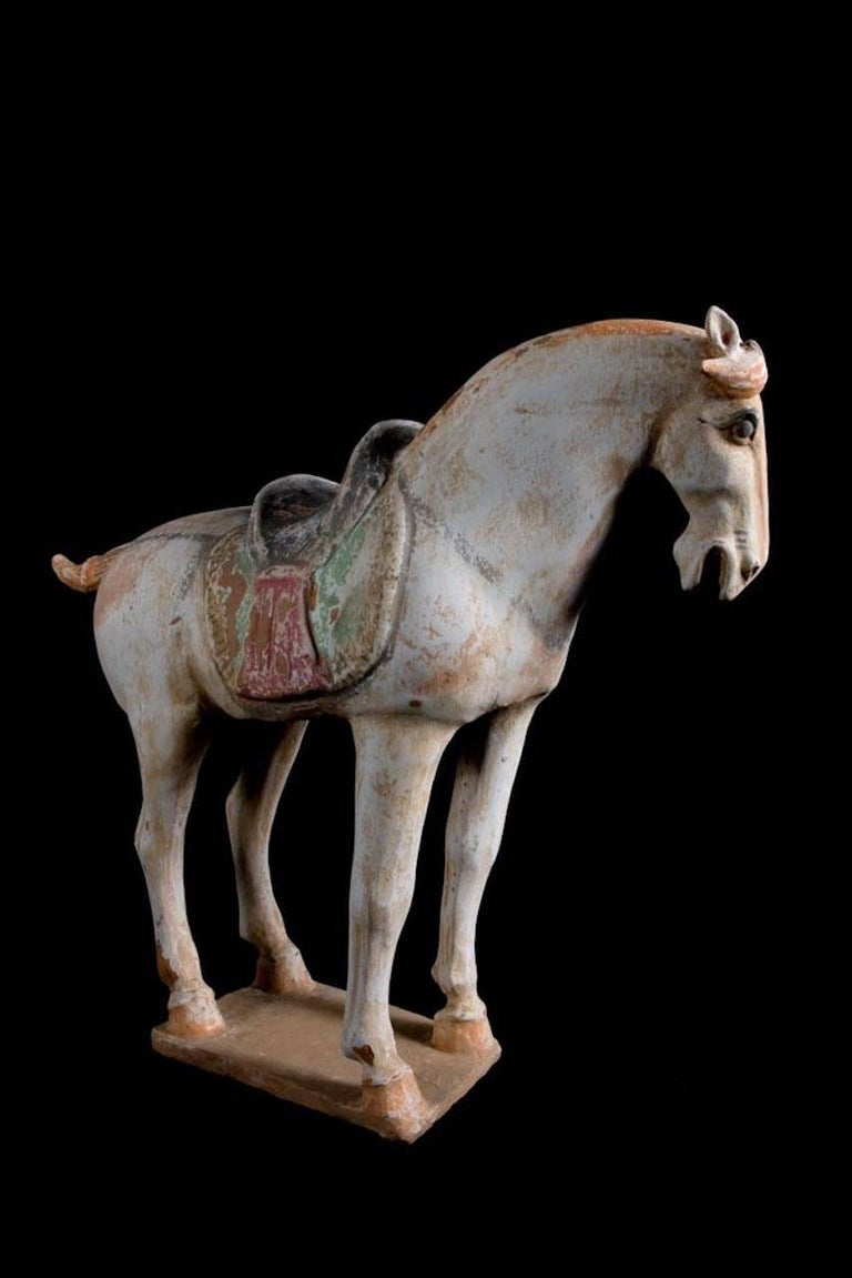 Stunning Terracotta Standing Horse, Tang Dynasty, China '618-907 AD', TL Test For Sale 1