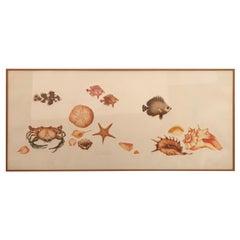 Summery Limited Edition Embossed Print of Seashells