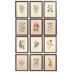 Superb Set of 12 Elizabeth Blackwell Botanical Engravings