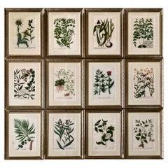 Superb Set of 12 Weinmann Botanical Engravings