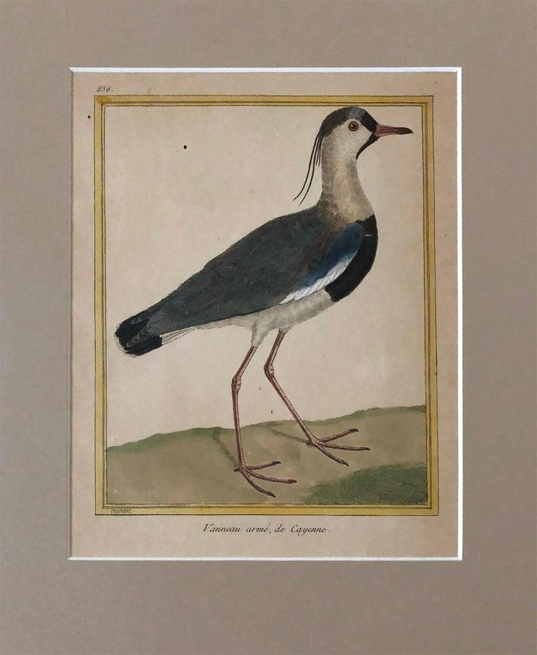 Superb Set of Twelve Martinet Bird Copper Plate Engravings 4