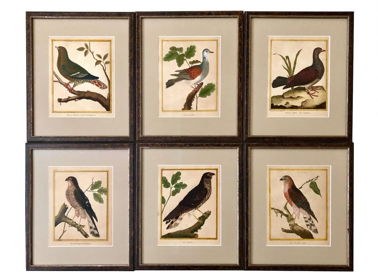 French Superb Set of Twelve Martinet Bird Copper Plate Engravings