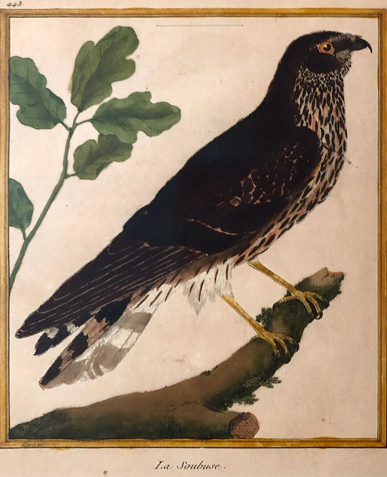 18th Century and Earlier Superb Set of Twelve Martinet Bird Copper Plate Engravings