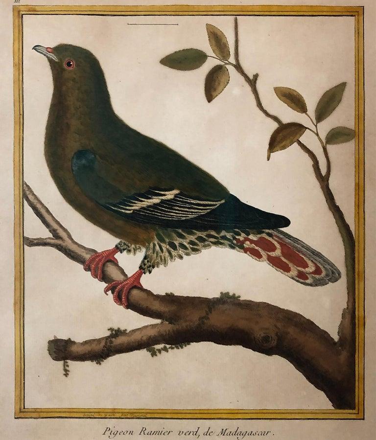 Superb Set of Twelve Martinet Bird Copper Plate Engravings 1