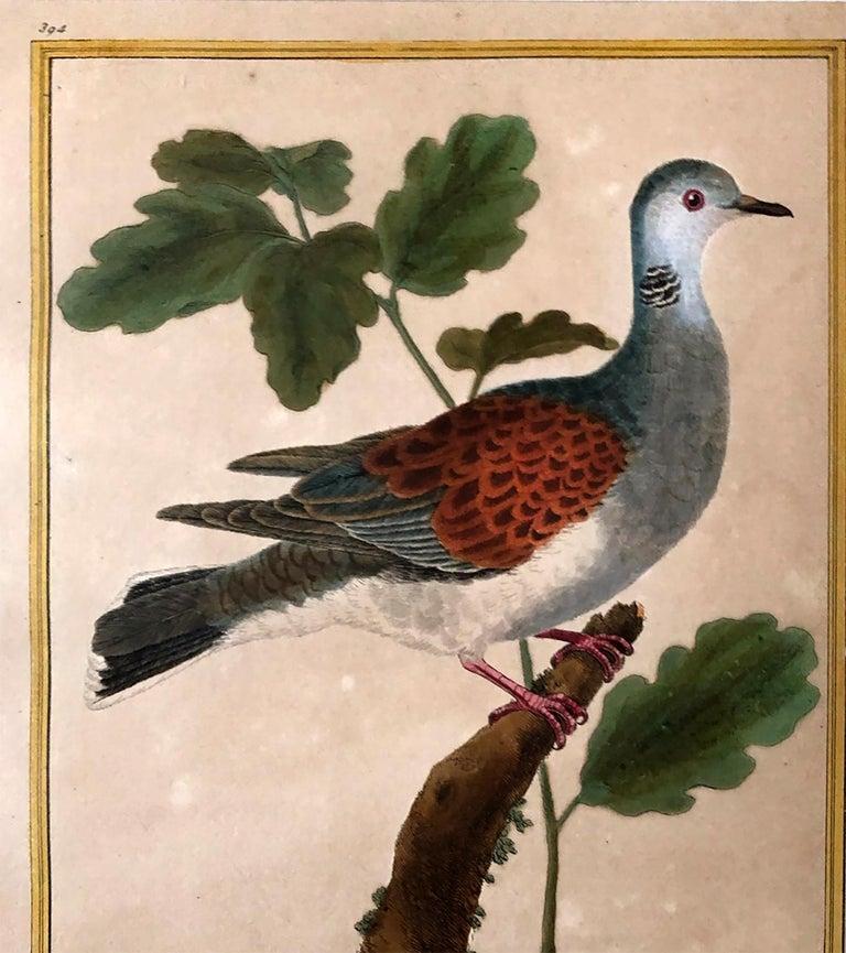 Superb Set of Twelve Martinet Bird Copper Plate Engravings 2