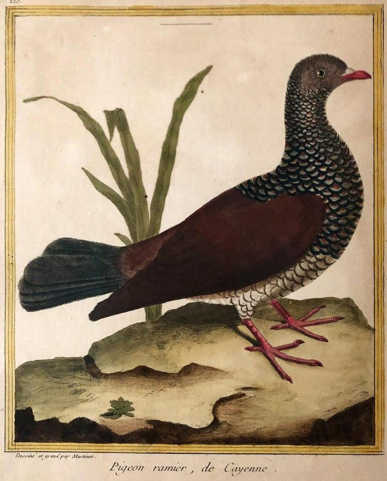 Superb Set of Twelve Martinet Bird Copper Plate Engravings 3