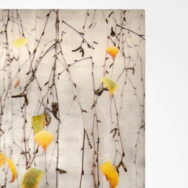 Autumn Echo For Sale 1