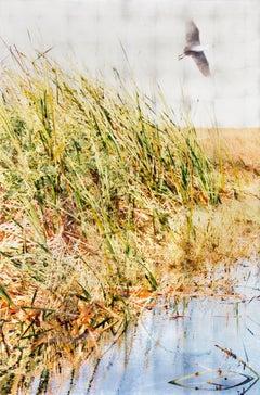 Breakout, Contemporary Realism, Resin, Landscape, Bird, Everglades