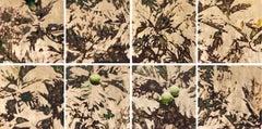 Nani Ulu (8 Panels), Contemporary Realism, Nature, Breadfruit, Resin,