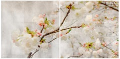 Spring Blush (Diptych), Contemporary Realism, Brooklyn Botanical Gardens, Flower