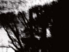 Night Trees, Photograph, Archival Ink Jet