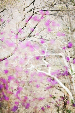Abstract Nature Photograph by camera artist Susan Wides  '5.4.15_3:50:51'