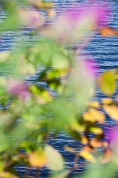 Abstract Nature Photograph by camera artist Susan Wides '9.11.15_3:20:17'