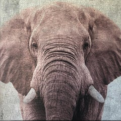 Oversized Large Dusty Rose Close-up Elephant Modern Contemporary Textural 72x72