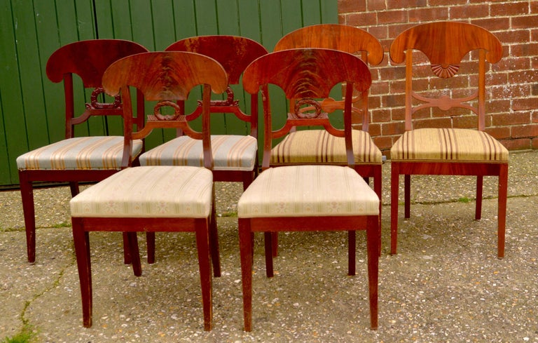 Unusual mixed set of antique Swedish flame mahogany Biedermeier dining chairs with the distinctive curved seat back, wreath and fan motifs and gracefully curved front legs.  The top grade flame veneers are brought to life in a rich darker french