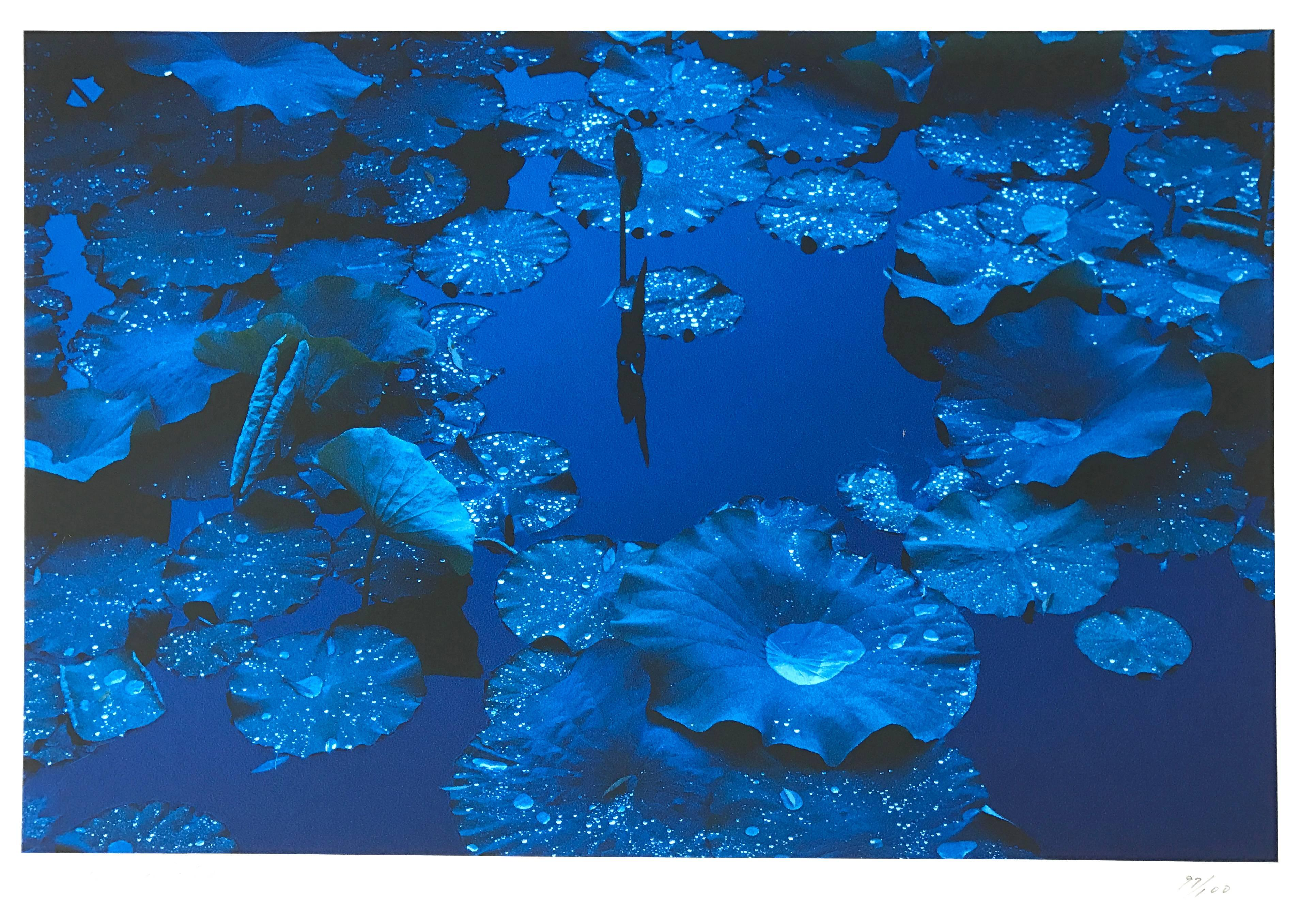Blue Lotus, Japan, Contemporary Color Japanese Photography, Signed by the Artist