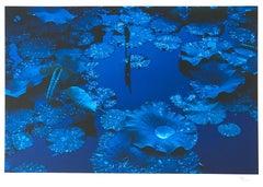 Blue Lotus, Japan, Contemporary Japanese Art Photograph on Rag Paper