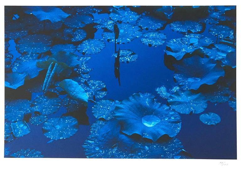 Tadayuki Naito Landscape Photograph - Blue Lotus, Japan, Contemporary Japanese Photography on Rag Paper
