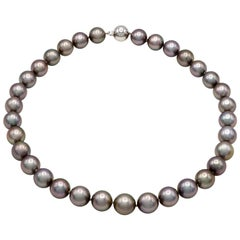 Tahitian Black Pearl Strand with Pink Undertones with a 14 Karat Ball Clasp