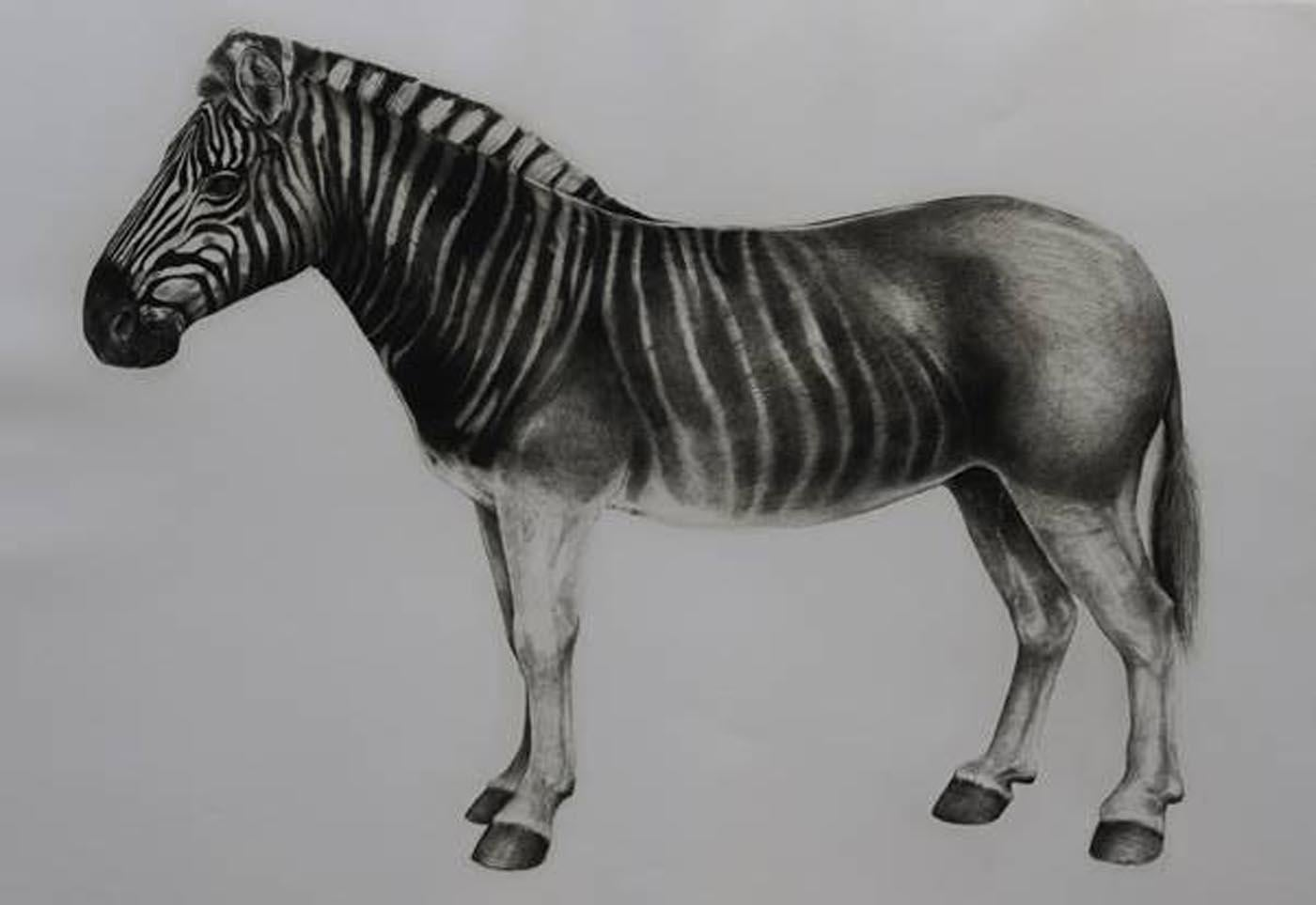 Quagga, animal print, limited edition print, affordable art for sale