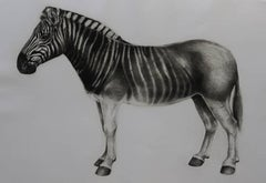 Quagga, animal print, limited edition print, affordable art for sale