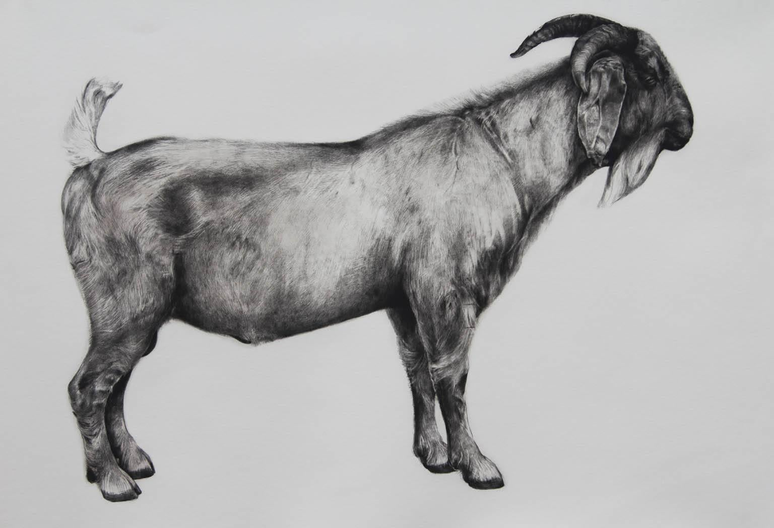 The Bearded One, black and white goat print, Animal Art, Limited edition print