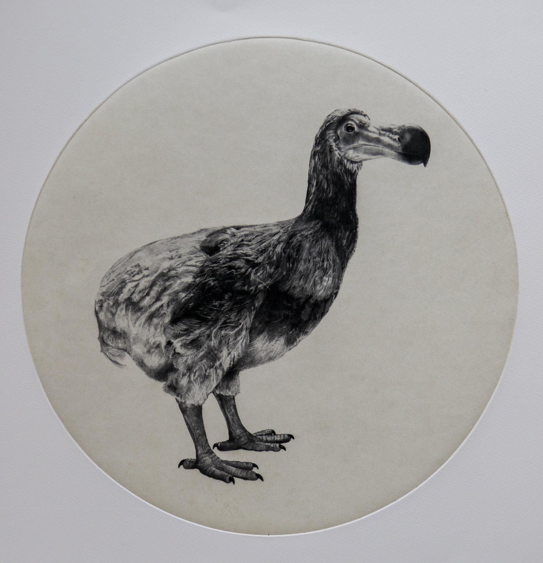 The Dutch Dodo, Tammy Mackay, Limited Edition Animal Print, Contemporary Art