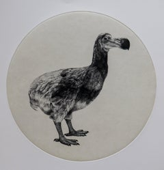 The Dutch Dodo, Tammy Mackay, Limited Edition Animal Print, Contemporary Art