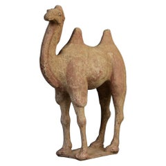 Tang Dynasty, Chinese Pottery Standing Camel