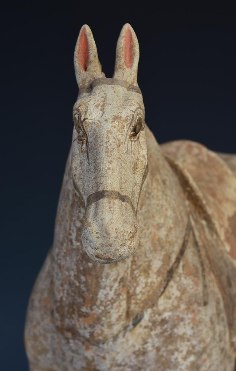Tang Dynasty, Chinese Pottery Standing Horse For Sale 8
