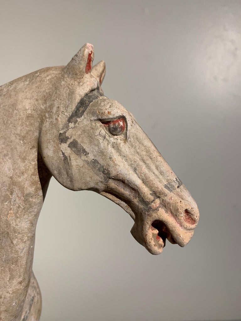 Tang Dynasty Horse and Rider, Painted Pottery, circa 9th Century, China For Sale 4