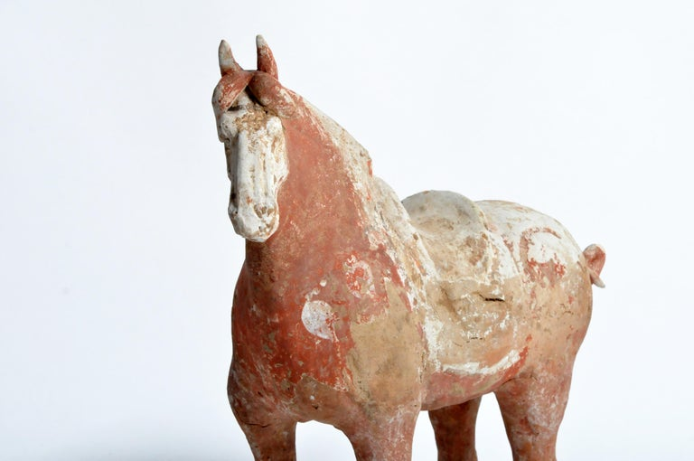 Tang Dynasty Horse For Sale 10