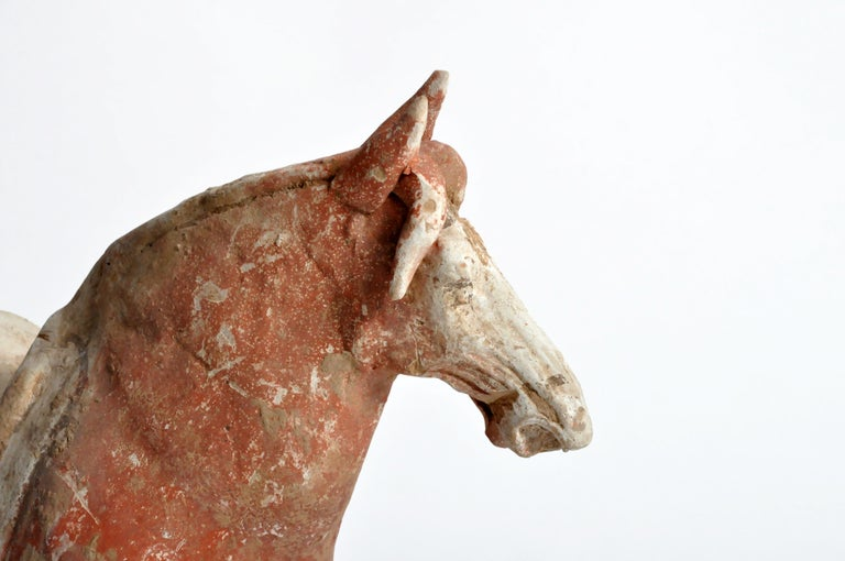 Tang Dynasty Horse For Sale 12