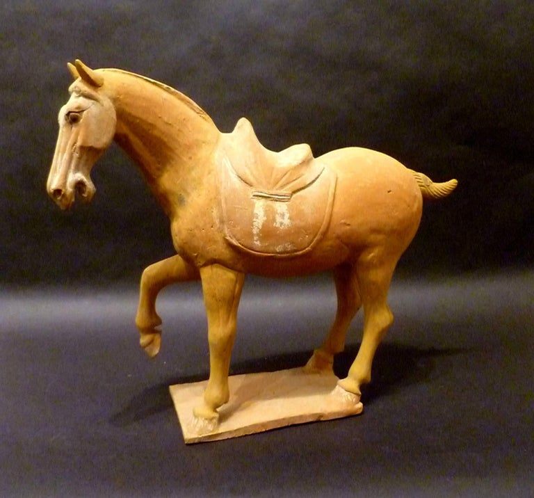 A naturalistically and lively modeled pottery statue of prancing horse, Tang dynasty 618-907, come with Oxford authentication TL test certificate.