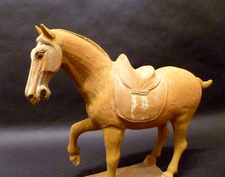 Chinese Tang Dynasty Pottery Prancing Horse with Oxford TL Test For Sale