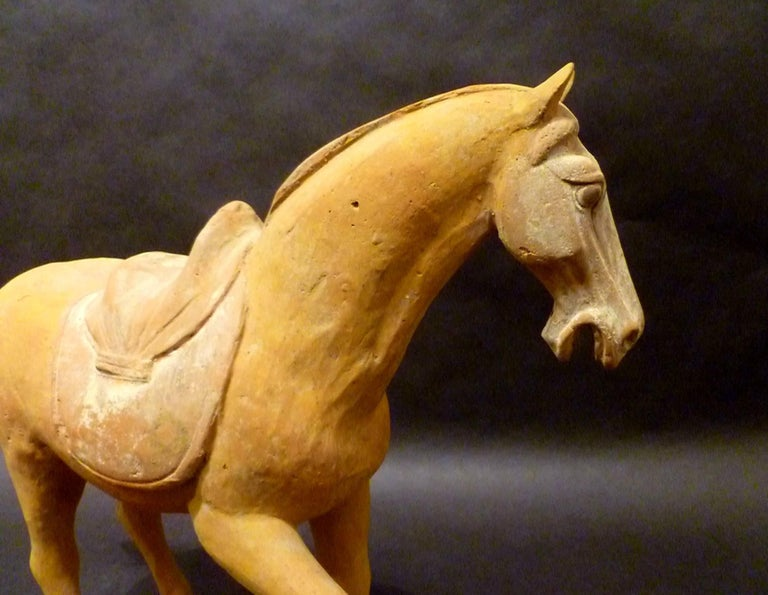 Hand-Crafted Tang Dynasty Pottery Prancing Horse with Oxford TL Test For Sale