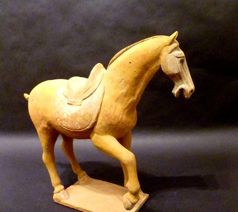 Tang Dynasty Pottery Prancing Horse with Oxford TL Test In Good Condition For Sale In Greenwich, CT