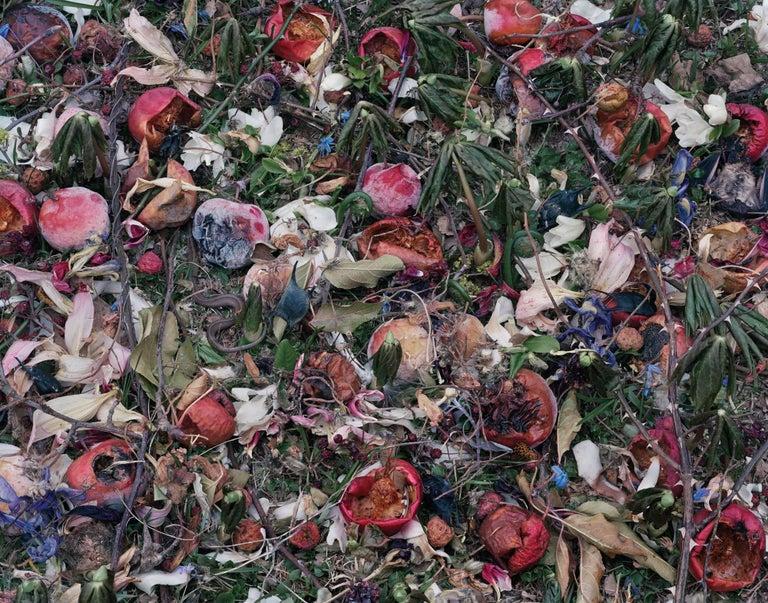 Tanya Marcuse Color Photograph - Fallen Nº439