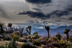 Yucca Skies - Photography, 21st Century, Contemporary, Landscape, High Desert
