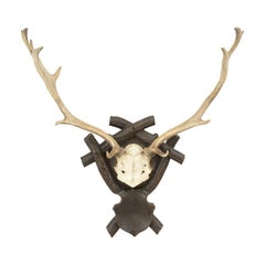 Taxidermy Antlers on Shield