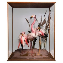 Taxidermy Composition of Three Flamingos' in Glass Case