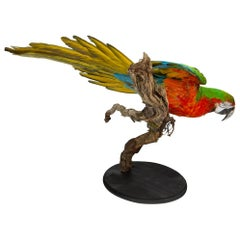 Taxidermy Macaw