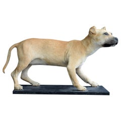 Taxidermy Mounted Female Staffordshire Bull Terrier