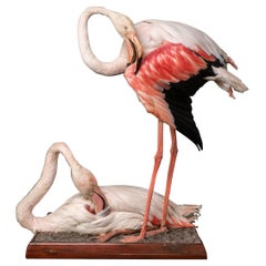 Taxidermy of Two Lovely Pink Flamingos