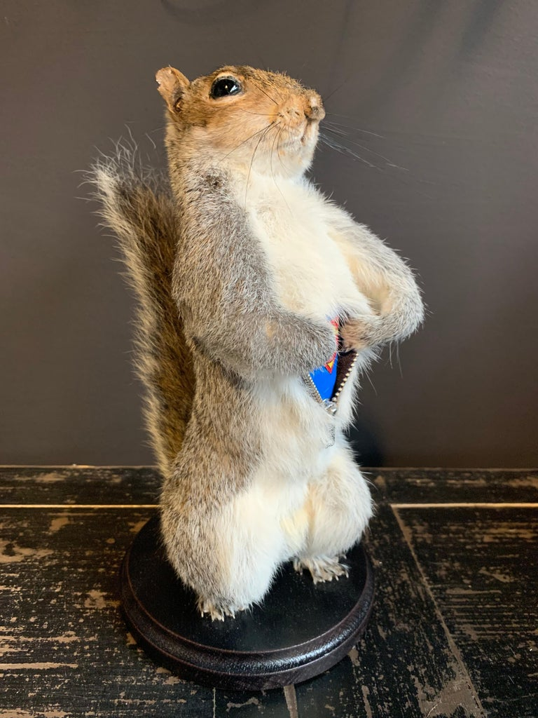 Taxidermy Super Squirrel In New Condition For Sale In Eindhoven, NL