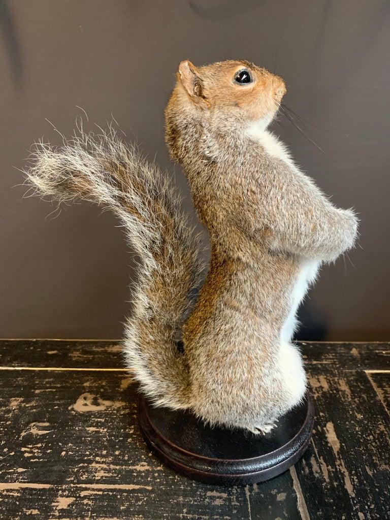 Contemporary Taxidermy Super Squirrel For Sale