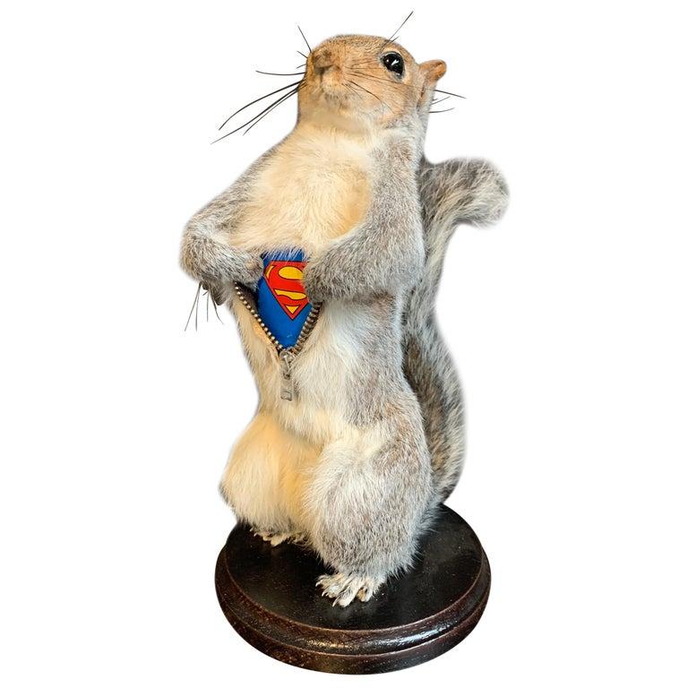 Taxidermy Super Squirrel For Sale