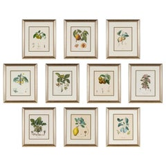 Ten Hand-Colored Color Stipple Engravings from Traite Des Arbres Fruitiers
